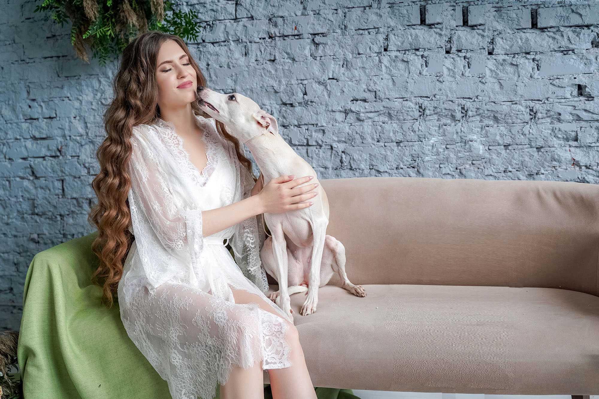 свадьба с домашними животными собаки